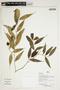 Herbarium Sheet V0386757F