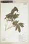 Herbarium Sheet V0386873F