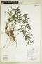 Herbarium Sheet V0386894F