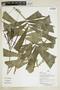 Herbarium Sheet V0386915F