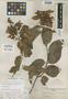 Banisteria nemorum image