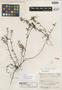Disterigma panamense Standl., Panama, M. E. Terry 1564, Holotype, F