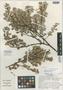 Disterigma trimerum Wilbur & Luteyn, Panama, C. R. Wilbur 19321, Isotype, F