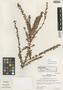 Disterigma dumontii Luteyn, Colombia, J. L. Luteyn 5093, Isotype, F