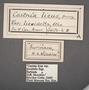 Telchin licus C labels