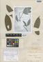 Duguetia quitarensis Benth., BRITISH GUIANA [Guyana], R. H. Schomburgk 561, Isotype, F