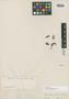 Myrcia cambessedeana O. Berg, BRAZIL, J. B. E. Pohl 1002, Isosyntype, F
