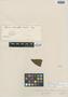 Myrcia reticulata Cambess., BRAZIL, A. F. C. P. de Saint-Hilaire, Isotype, F