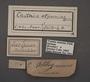 Telchin atymnius humboldti A labels