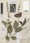 Salvia comayaguana Standl., Honduras, P. C. Standley 55842, Holotype, F