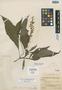 Salvia drymocharis Epling, Costa Rica, P. C. Standley 42964, Isotype, F