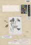 Salvia natalis Epling, GUATEMALA, E. W. Nelson 3625, Isotype, F