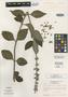 Salvia selguapensis Ant. Molina, HONDURAS, A. Molina R. 23304, Holotype, F