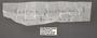 Castnia eudesmia D label