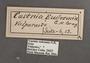 Castnia eudesmia B label