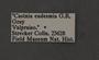 Castnia eudesmia E label
