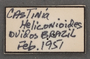 Gazera heliconioides obidona labels