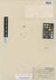Bidens ambigua S. Moore, ANGOLA, J. Gossweiler 1189, Isotype, F