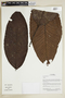 Herbarium Sheet V0375678F