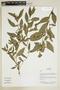 Herbarium Sheet V0375725F
