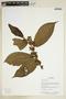 Herbarium Sheet V0375736F