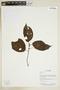 Herbarium Sheet V0375749F