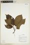 Herbarium Sheet V0375750F