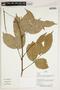 Herbarium Sheet V0387409F