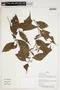 Herbarium Sheet V0387267F