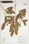 Herbarium Sheet V0387302F