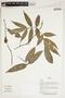 Herbarium Sheet V0387410F