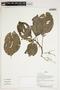Herbarium Sheet V0387283F