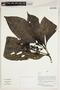 Herbarium Sheet V0387380F