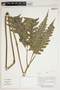 Herbarium Sheet C0675360F