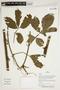Herbarium Sheet V0387412F