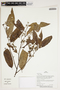 Herbarium Sheet V0387311F