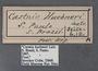 Geyeria hubneri A label
