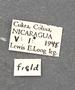 Telchin atymnius futilis D labels