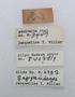 Feschaeria amycus labels