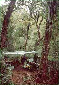 One of our camps in montane forest on Biliran Island [Copyright] Field Museum of Natural History - CC BY-NC