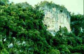 "Natural erosion has given rise to a beautiful landscape referred to as ""karst."" Limestone forest only occur where there are unusual soil conditions. [Copyright] Field Museum of Natural History - CC BY-NC"