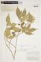 Trischidium alternum (Benth.) H. E. Ireland, BRITISH GUIANA [Guyana], F