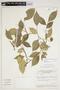 Trischidium alternum (Benth.) H. E. Ireland, BRAZIL, F