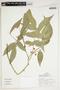 Trischidium alternum (Benth.) H. E. Ireland, Peru, J. Schunke Vigo 16306, F