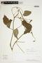Rhynchosia reticulata image