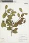 Buchenavia oxycarpa (Mart.) Eichler, Peru, M. Rimachi Y. 3297, F