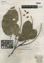 Aldina insignis Benth., BRITISH GUIANA [Guyana], R. H. Schomburgk 524, Isotype, F