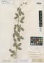 Collaea rosea Benth., BRITISH GUIANA [Guyana], R. H. Schomburgk 261, Isotype, F