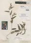 Eriosema lanceolatum Benth., BRITISH GUIANA [Guyana], R. H. Schomburgk 651, Isotype, F