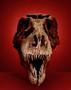 SUE skull